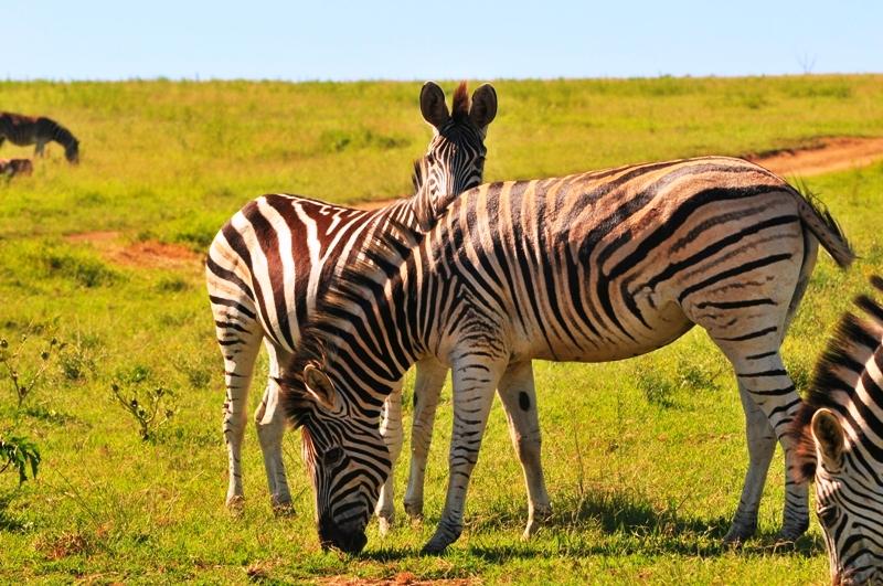 Africa Safari (6/6)