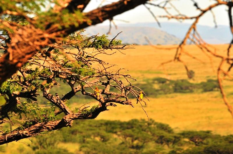 Africa Safari (3/6)