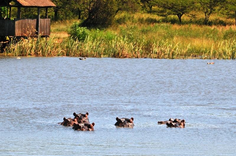 Africa Safari (1/6)
