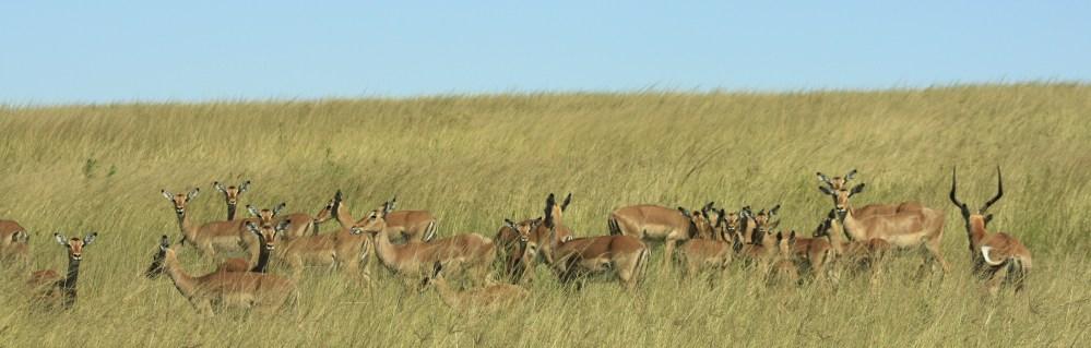 Africa Safari (2/6)